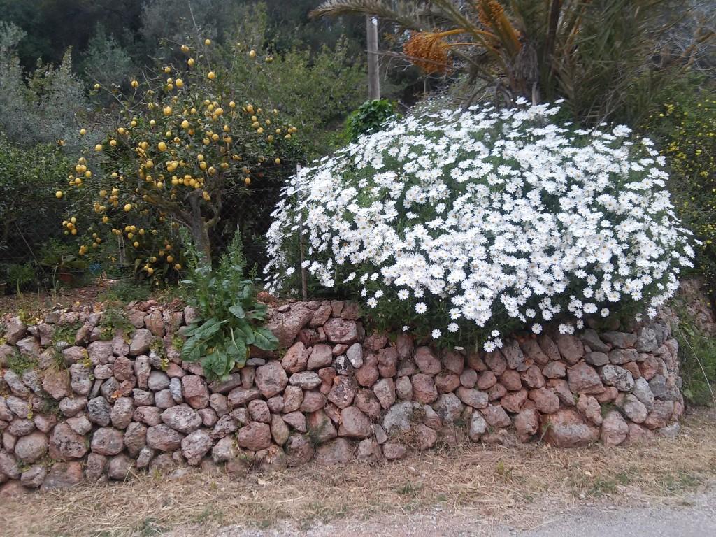Tolles Blumenarrangement in Esporles