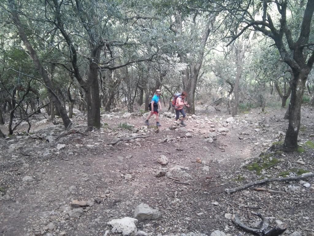 Waldweg am Fusse von Tossal Verds