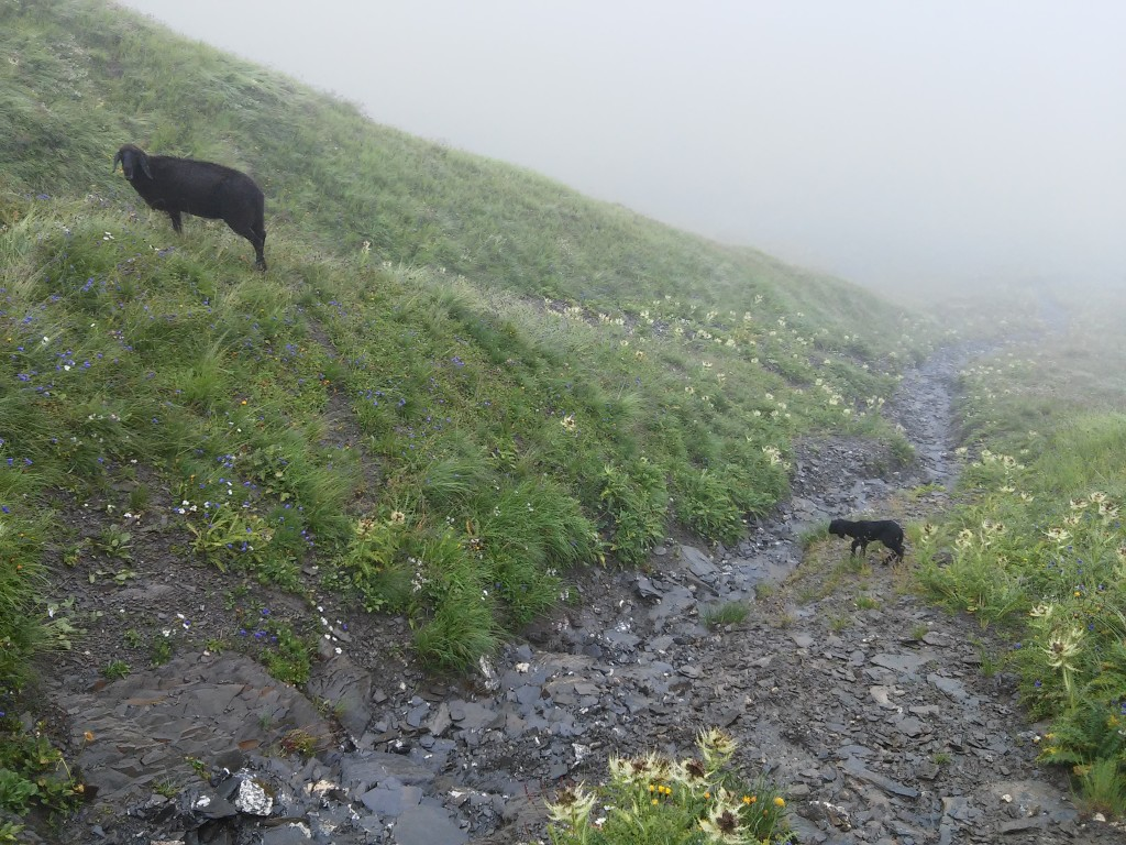 Schwarzes Schaf mit kleinem Baby