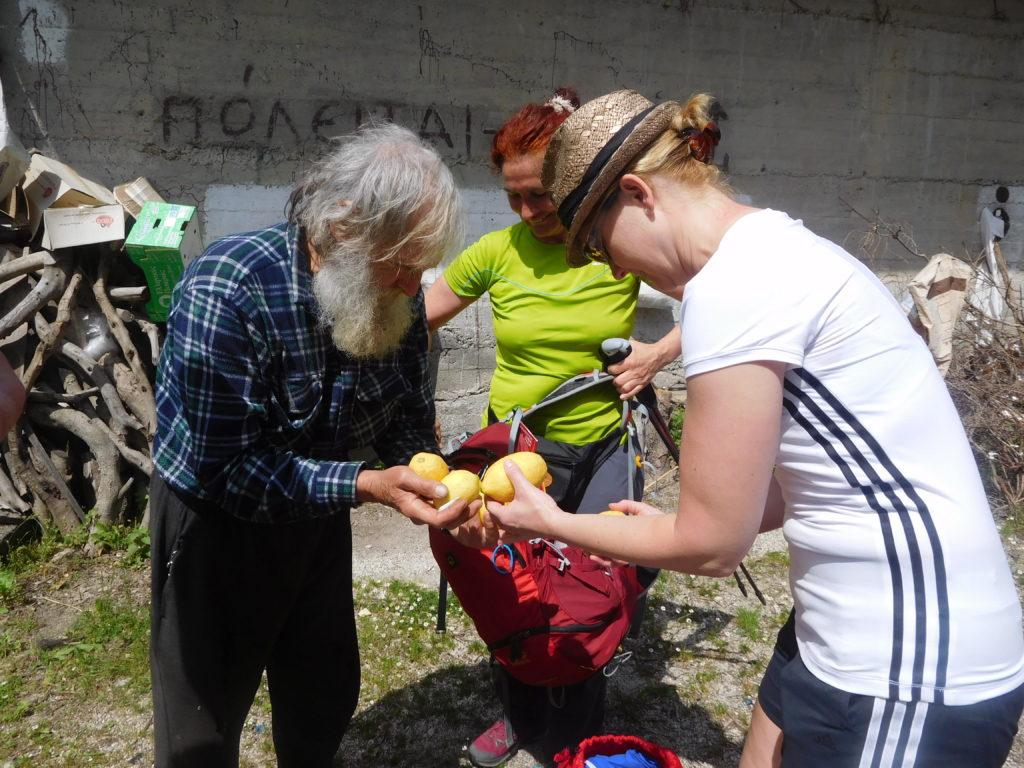 Zitronen frisch vom Baum