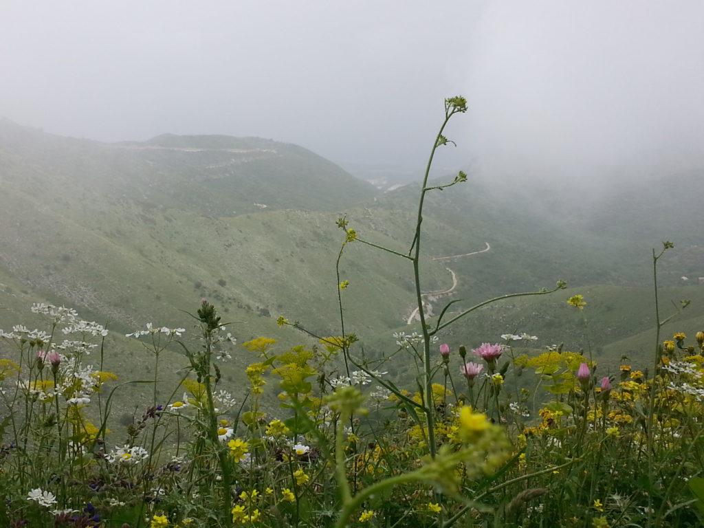 Der Weg nach Nisaki im Regen